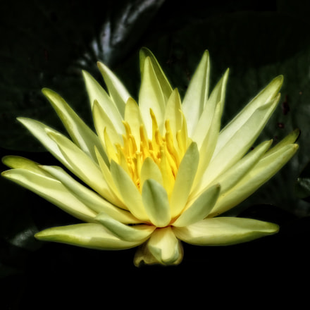 Glowing Yellow Flower