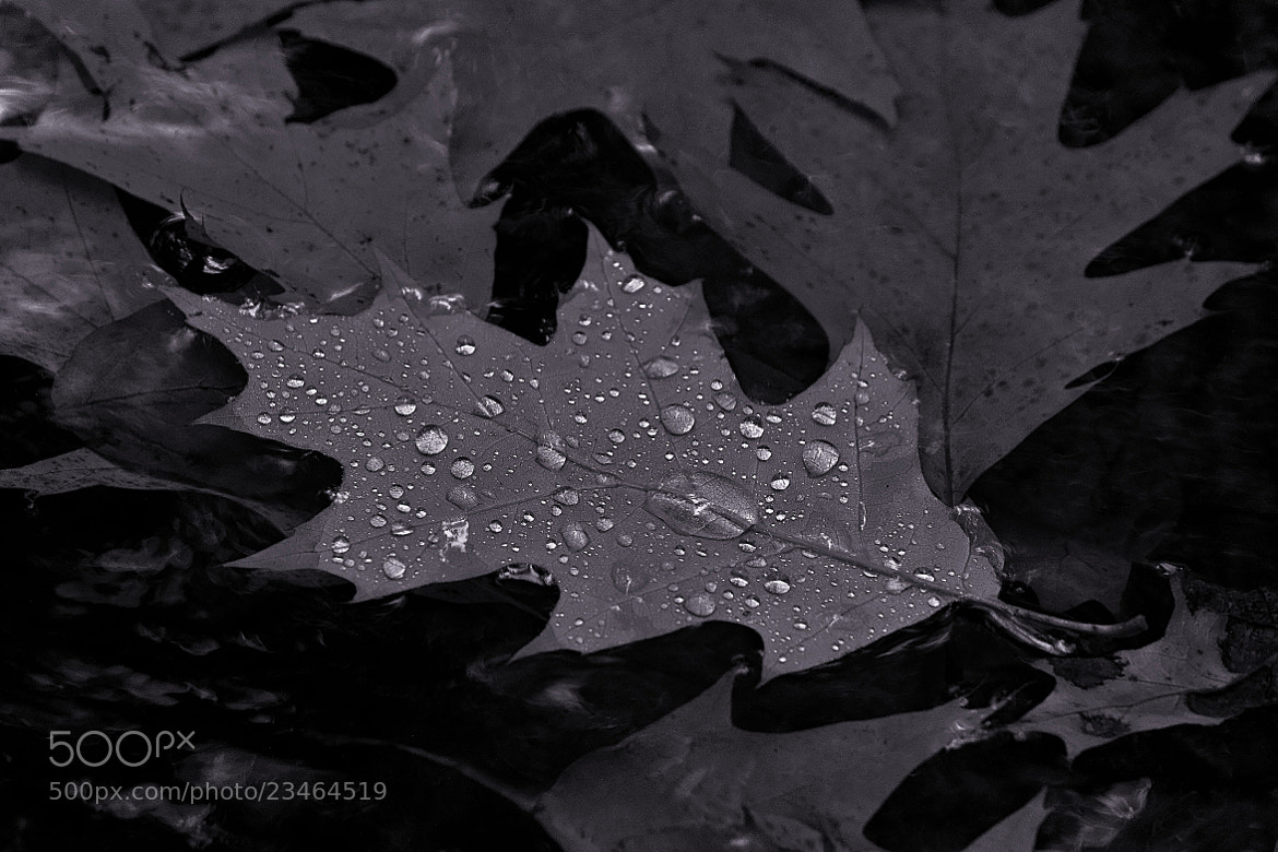 Photograph The trip of water droplets. by Miguel Silva on 500px
