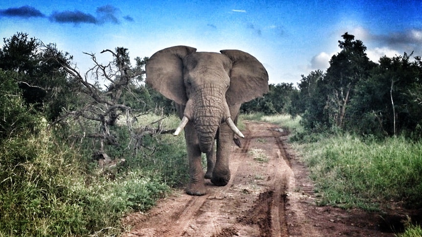 Photograph Elephant encounter by Paulo Deucher on 500px