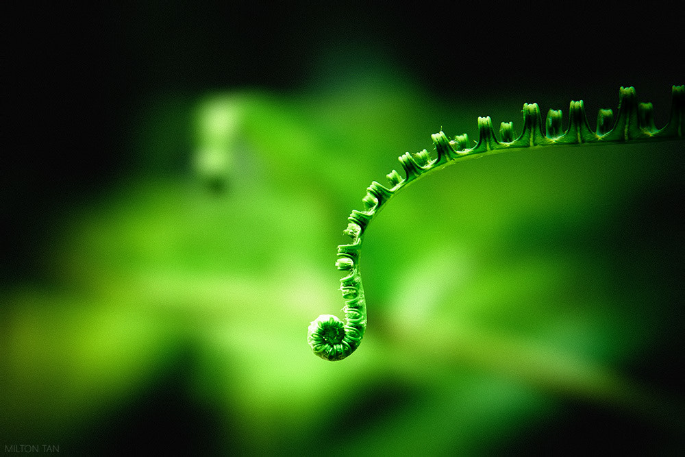 Photograph New Life by Milton Tan on 500px