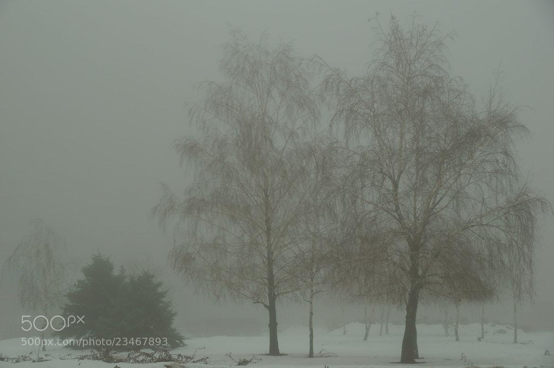 Photograph Fog... by Grigory Nesvetaev on 500px