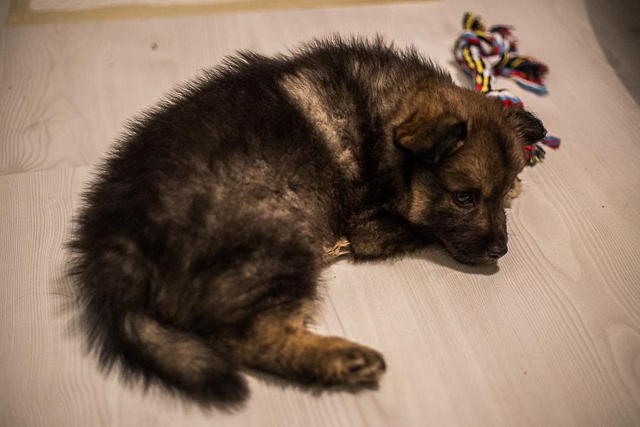 Jekku by Simo Ikävalko on 500px.com