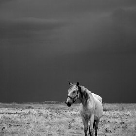 White horse in cloudy day