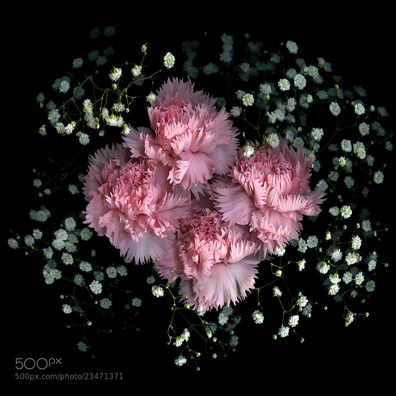 Photograph   PINK QUADRILLE... by Magda Indigo on 500px