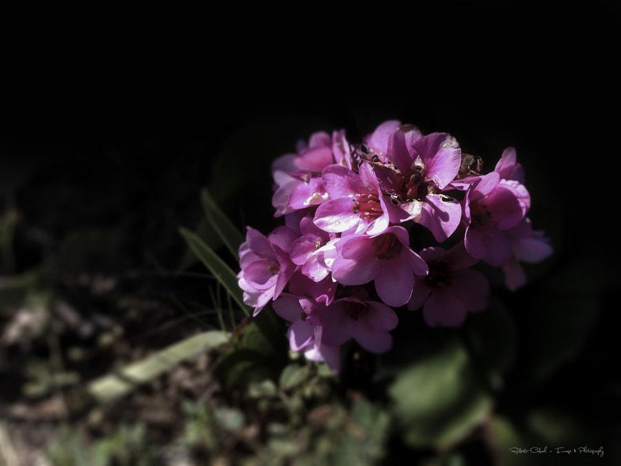 Extendida al sol de Roberto Cabral │Image & Photography en 500px.com