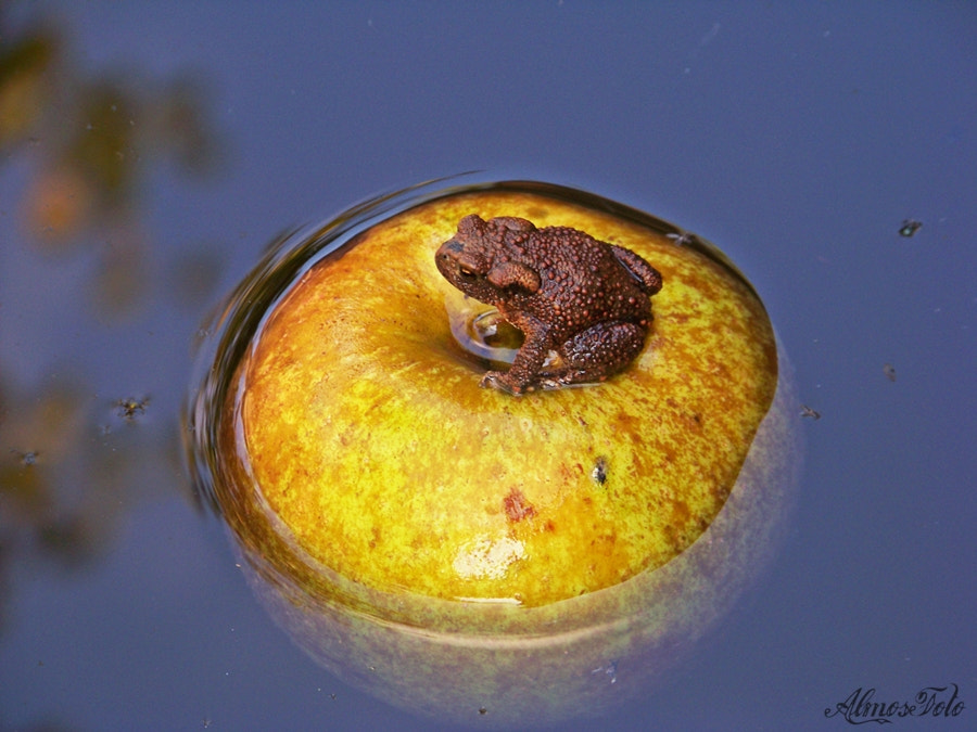 Photograph Toad on apple by Alma Kerpauskiene on 500px
