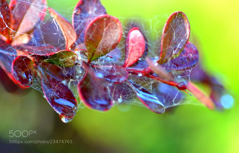 Photograph Morning Dew by Madan Neelagiri on 500px