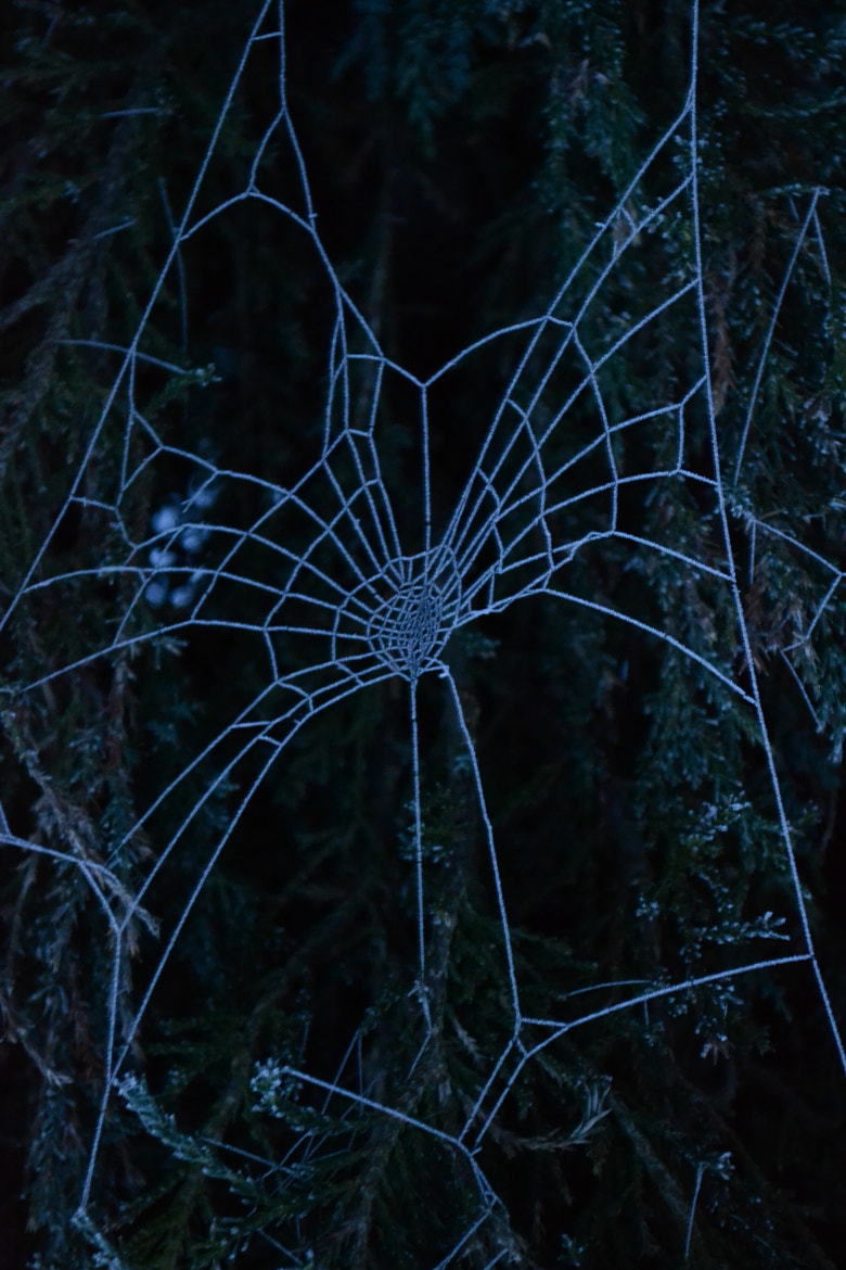 Photograph Spider Web by Jaccy Gascoyne on 500px