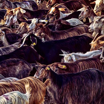 Goats pattern