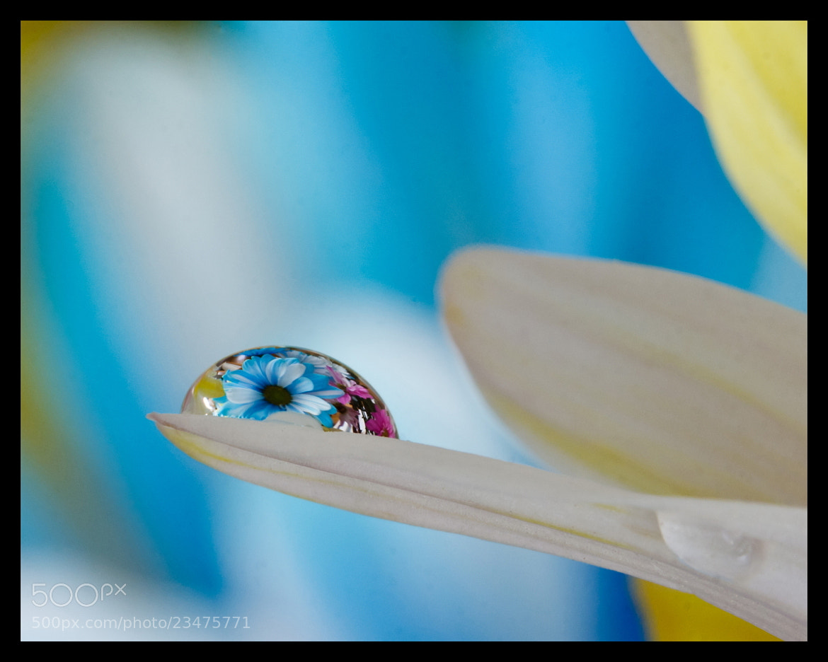 Photograph Flower in drop by Atchuta Alapati on 500px