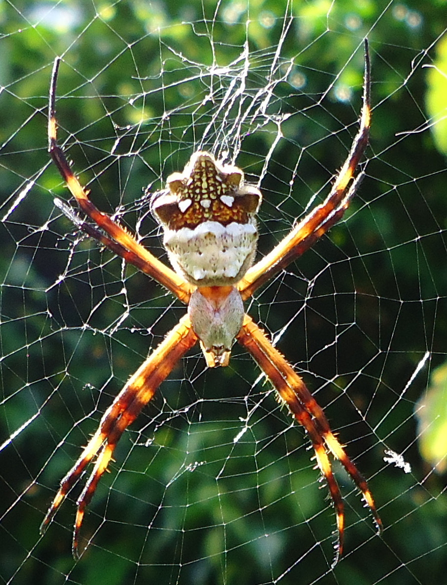 Photograph Spider by Tiffany Sawh on 500px