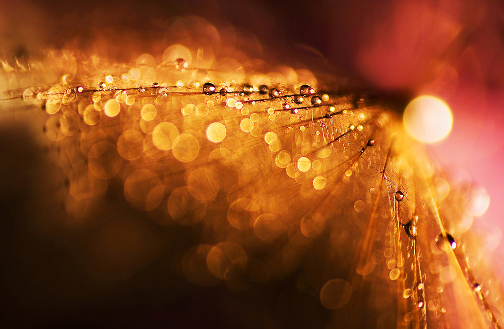 Photograph Glitter by Marcsi Kesjarne on 500px