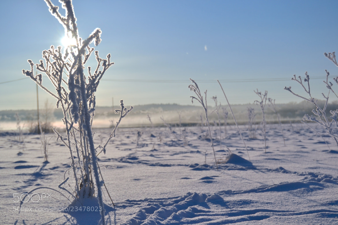Photograph WINTER 2 by Hilda Grönvall on 500px