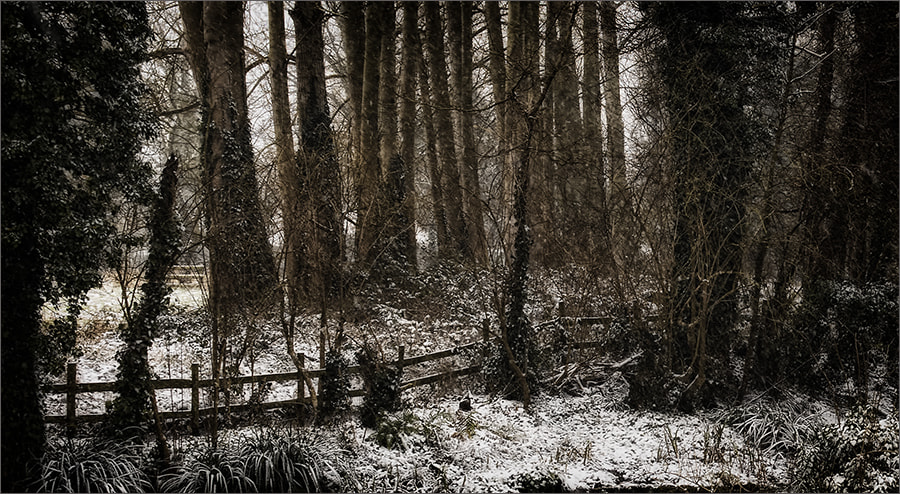 Photograph Fence and Trees, Brightwell-cum-Sotwell by Andrew Barrow ARPS on 500px