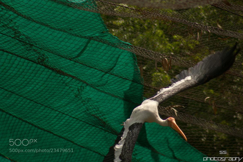 Photograph Birds by Sunil Sankar on 500px