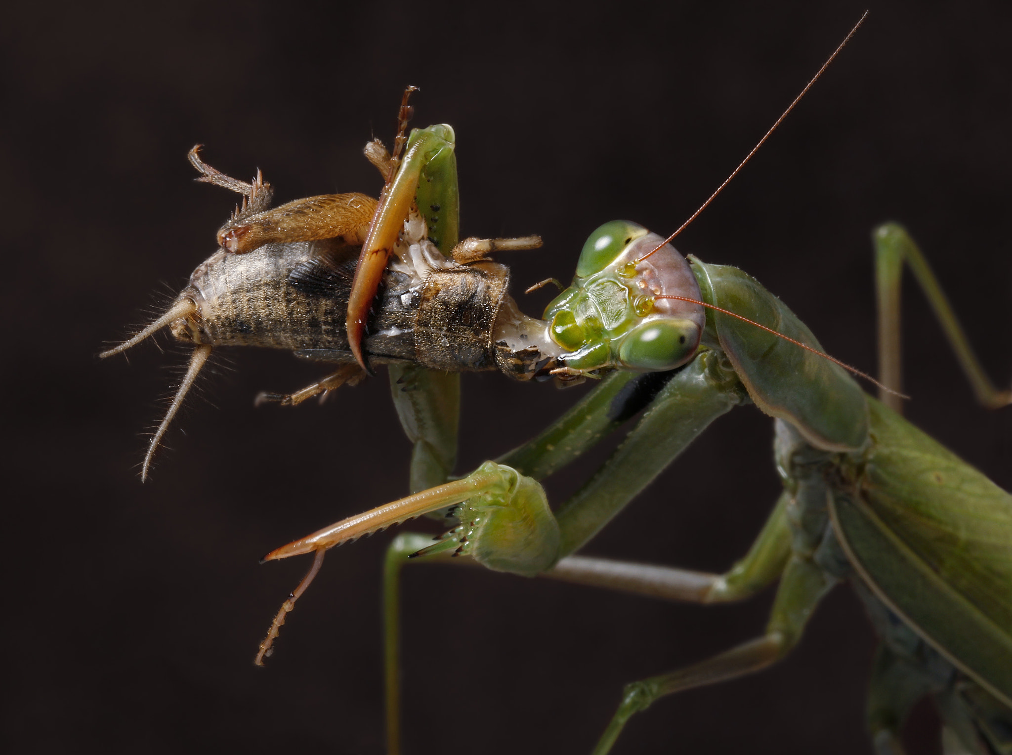 Photograph Dont eat my head by Carles  Just on 500px