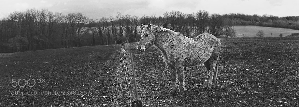 Photograph The lone horse by Emilie  on 500px