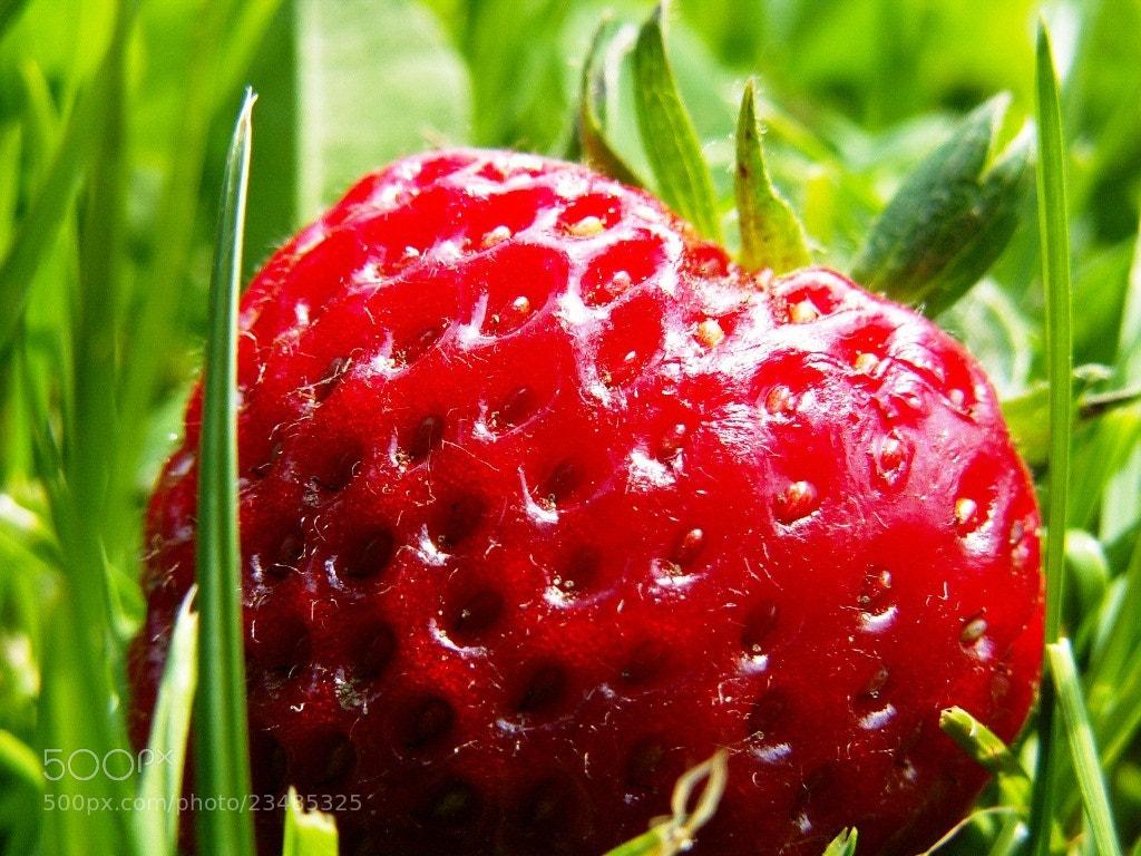 Photograph Polish Strawberry by Dominik Warmuz on 500px