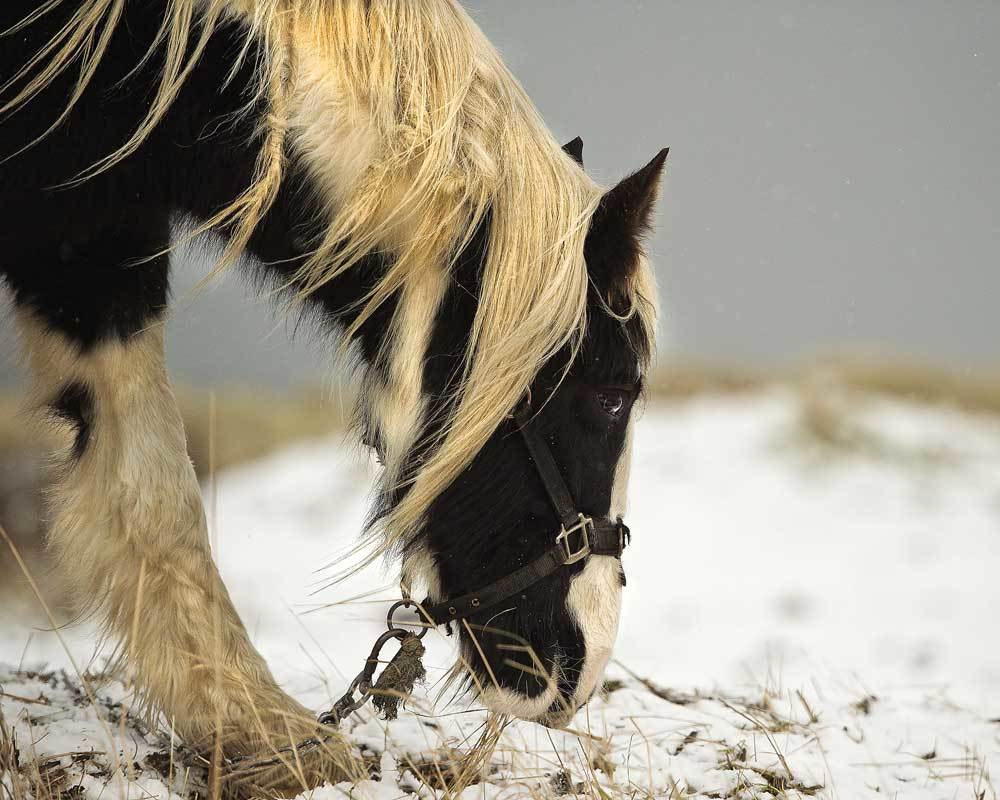 Photograph Cresswell Pony by Terry Cavner on 500px