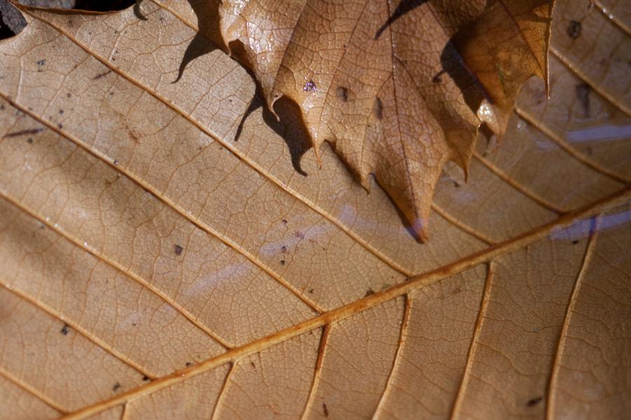 Après la pluie (after the rain) de Christine Druesne sur 500px.com