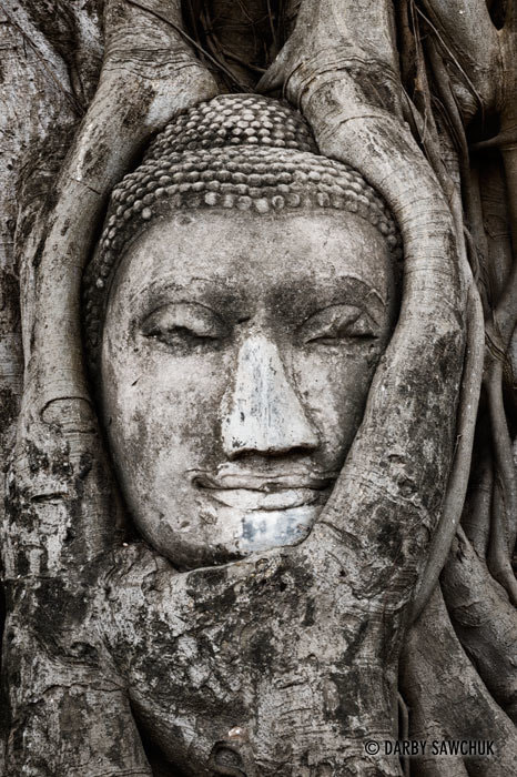 Photograph The Buddha in the Tree by Darby Sawchuk on 500px