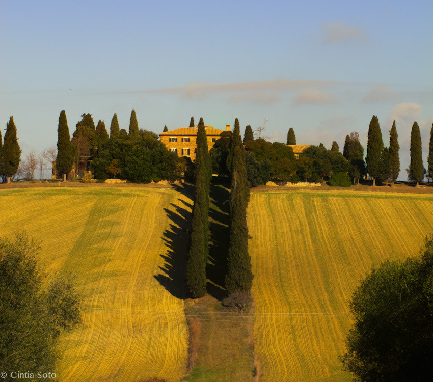 Photograph cypress gateway by Cintia Soto on 500px