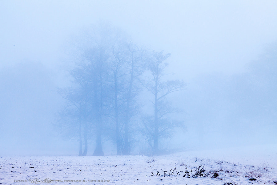 Photograph TREES IN WINTER MIST by COLIN MOLYNEUX on 500px