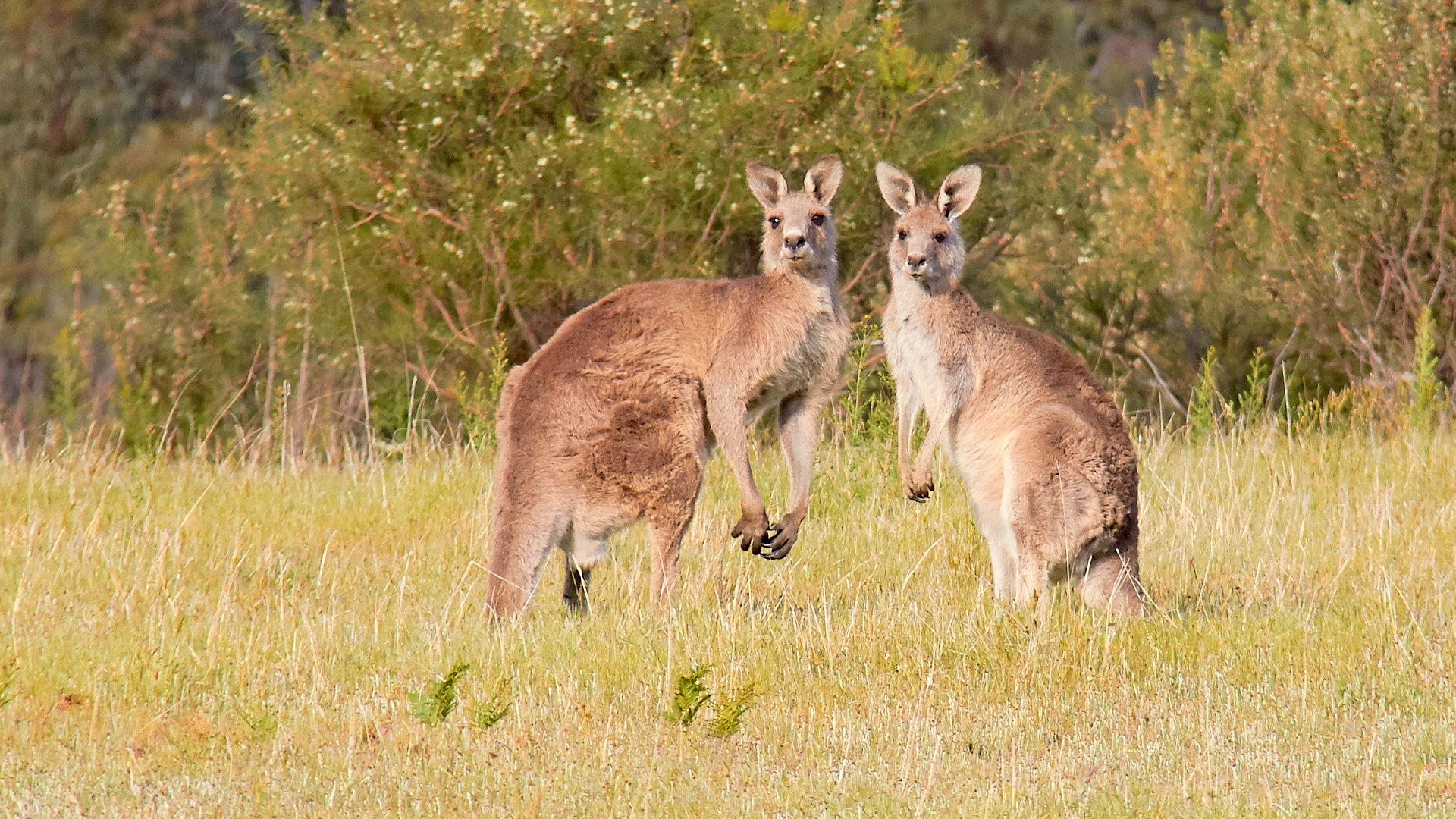 """Photograph """"Do You see these greenhorns?"""" by Unknown Drummer on 500px"""