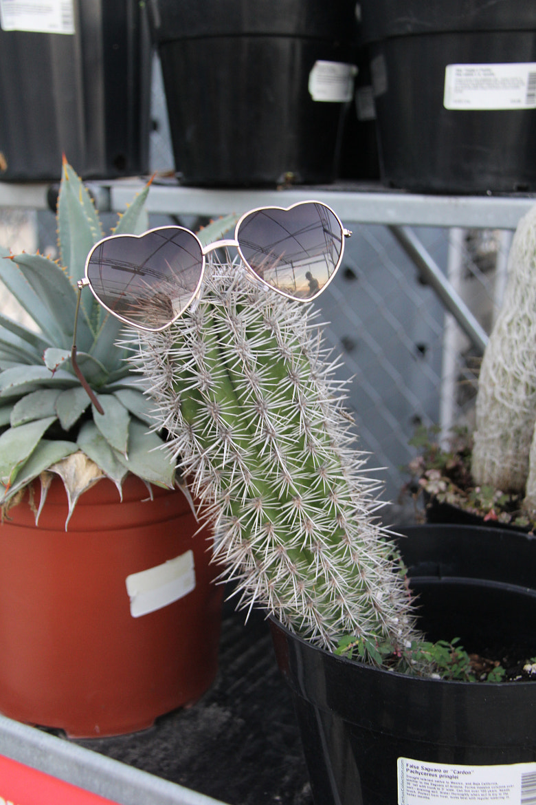 Photograph Chill Cactus by Rain Shanks on 500px