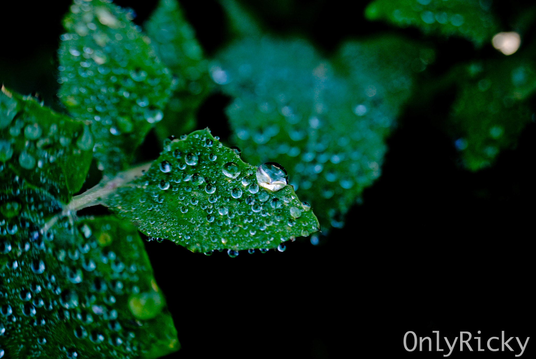 Photograph Dew by Ricardo Cardoso on 500px