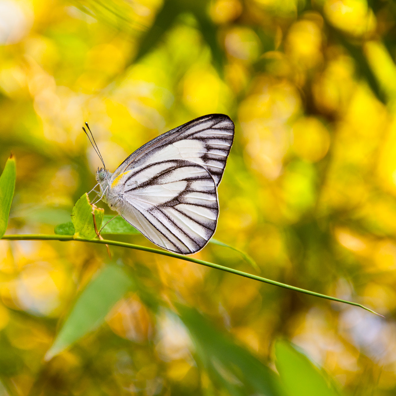 Photograph Butterfly by LiangJin Lim on 500px