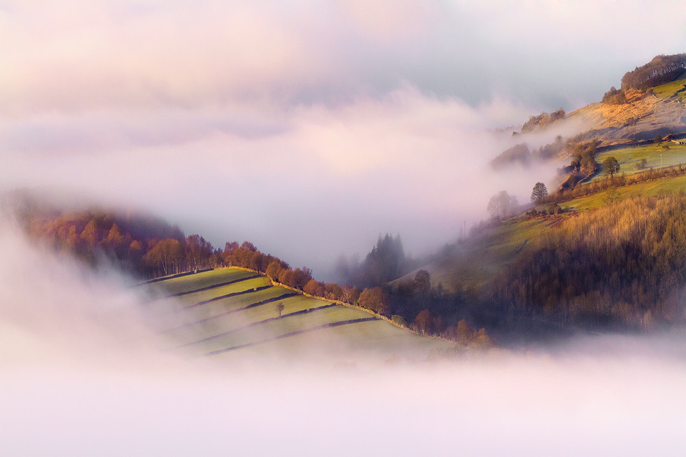 Photograph Enveloping Mist by Chris Miles on 500px