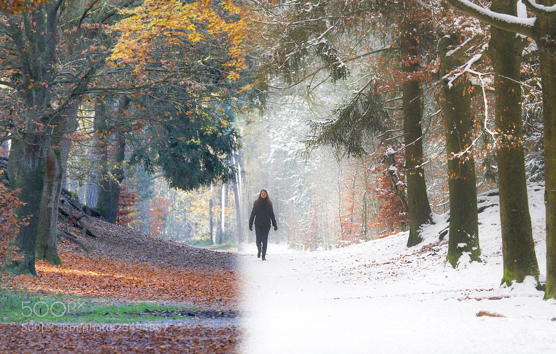 Photograph Autumn/Winter by Teuni Stevense on 500px