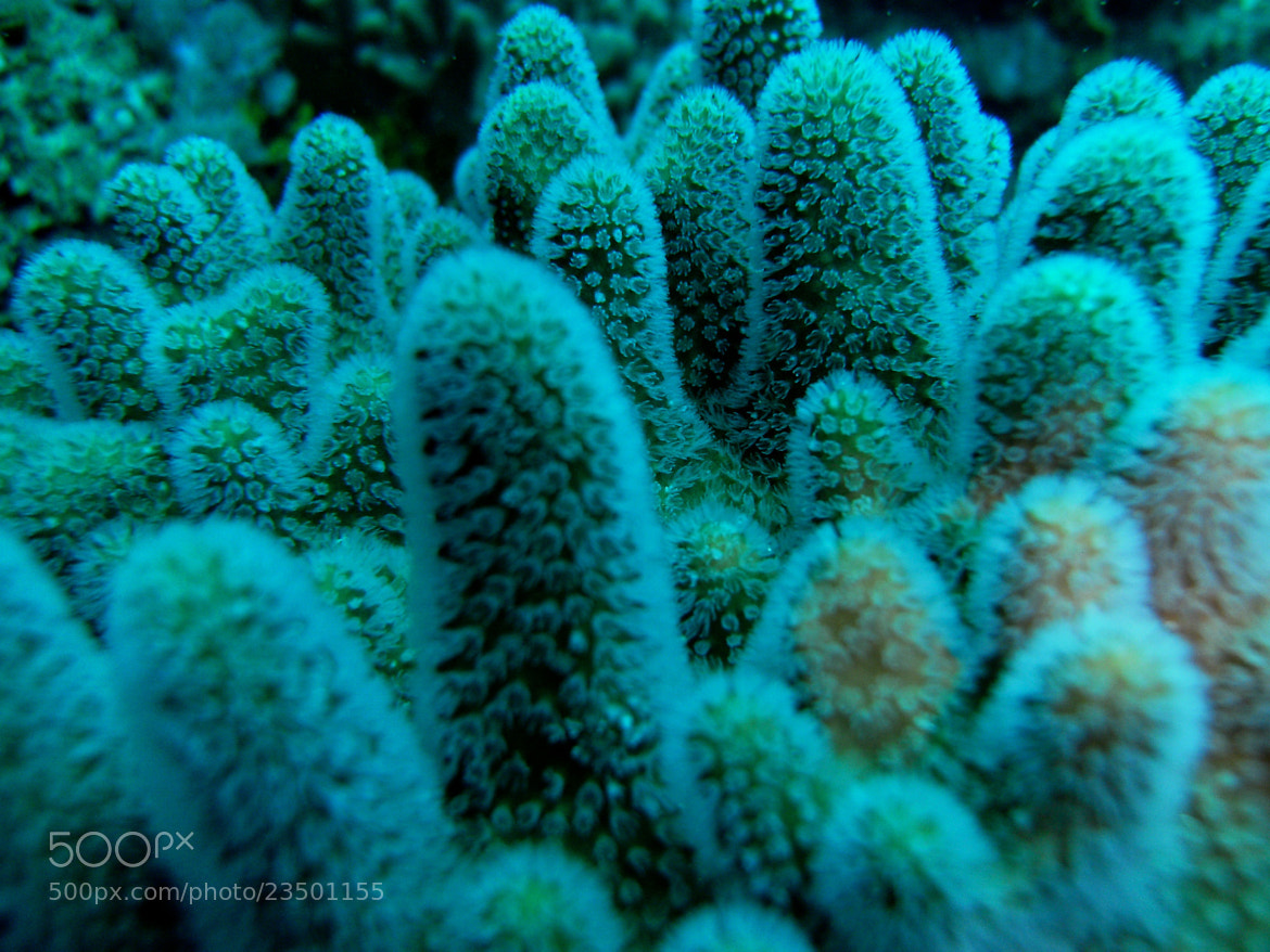 Photograph Coral Garden by Jacca  Deeble  on 500px