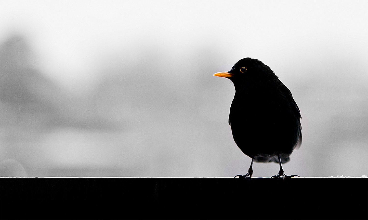 Photograph Blackie by Mikael Sundberg on 500px