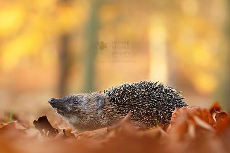 I Smell.....Autumn!