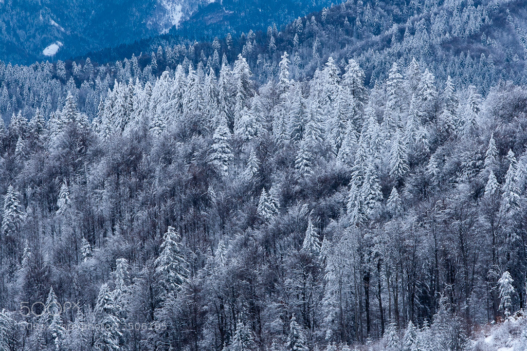 Photograph Romanian Wilderness Winter by Eros Nicolau on 500px
