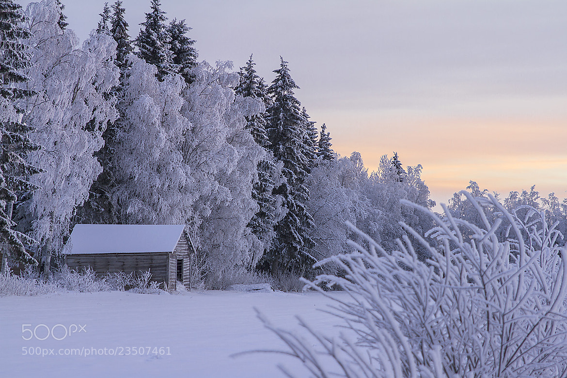 Photograph Winter in Finland by ulrica wik on 500px