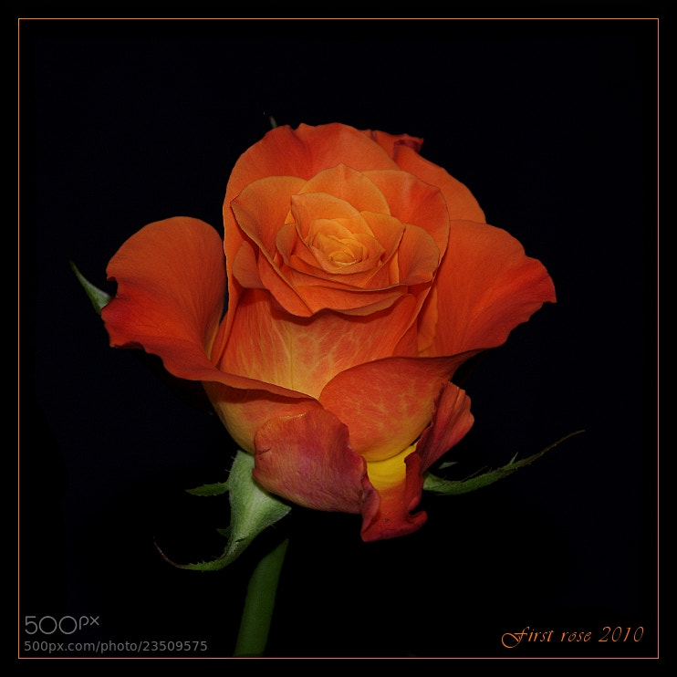 Photograph Beauty in orange by ade_frbw on 500px