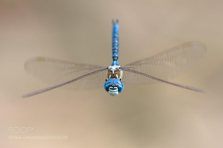 Photograph Big Blue Eyes by Martin Černý on 500px