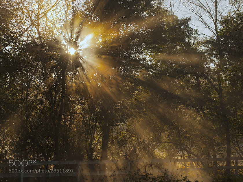 Photograph Sunburst by Mike Scott on 500px