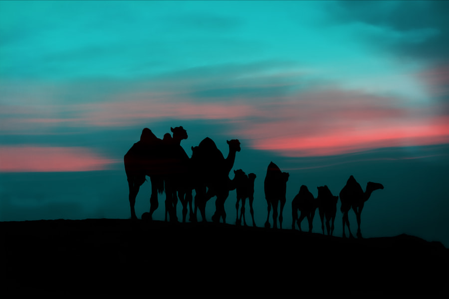 Camels On Peak Silhouette, автор — Jeff на 500px.com