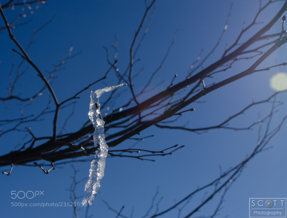 Photograph Lonely Icicle by Rob Scott on 500px