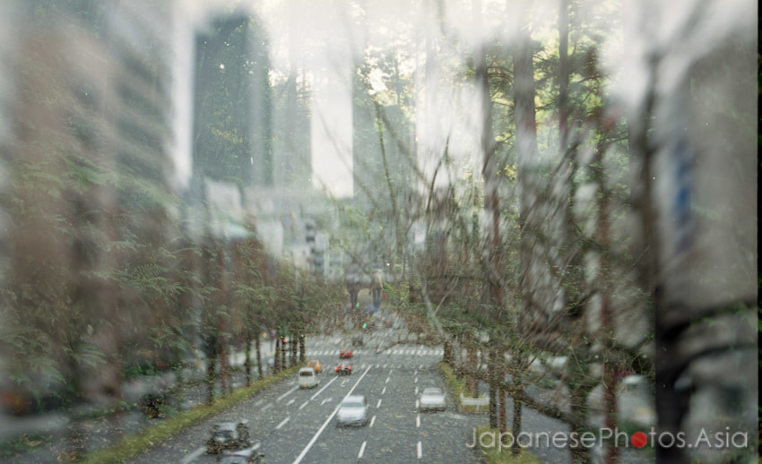 Photograph Fall of nature 1: Urban jungle. by Andrew JapanesePhotos on 500px