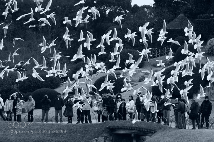 Photograph The Birds by Kaz Watanabe on 500px