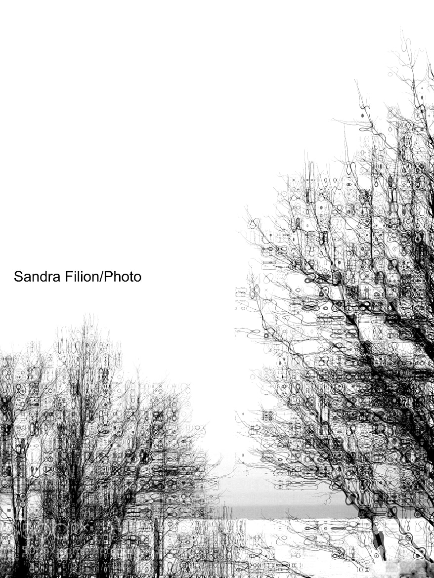 Photograph ABSTRACT TREE by sandra filion on 500px