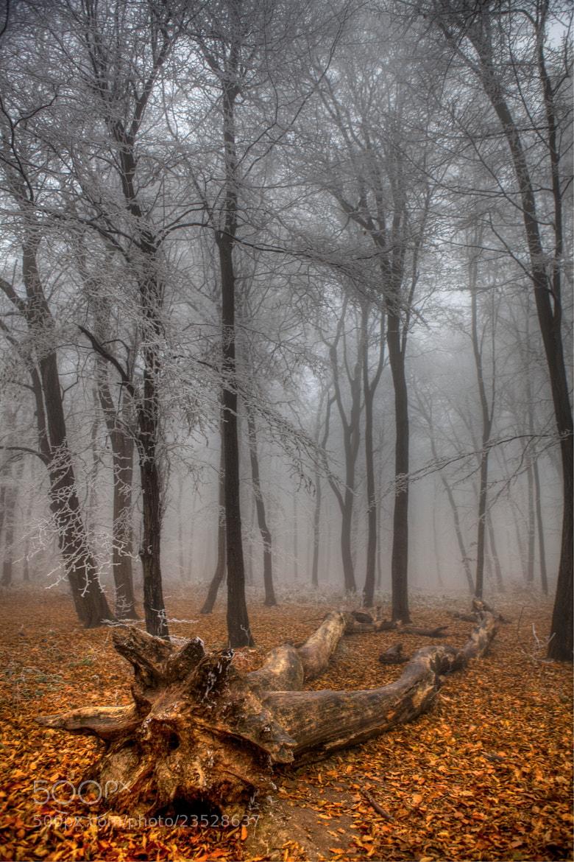 Photograph Seasons change  by Béla Török on 500px