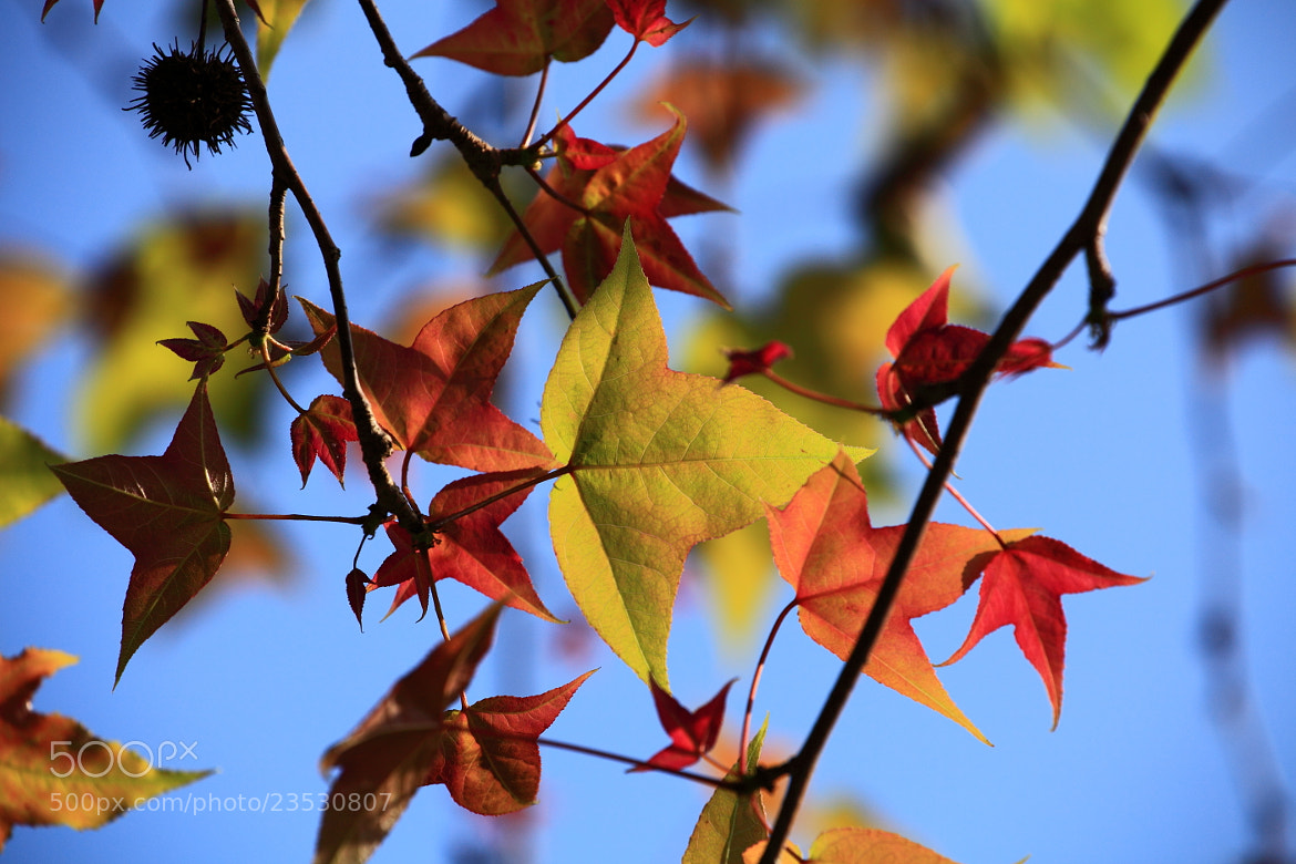 Photograph The Leaves by Mike Hsu on 500px