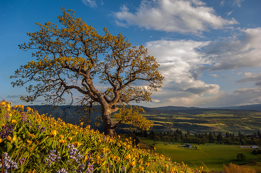 Photograph Valley View by Henrik Anker Bjerregaard  Lundh III on 500px