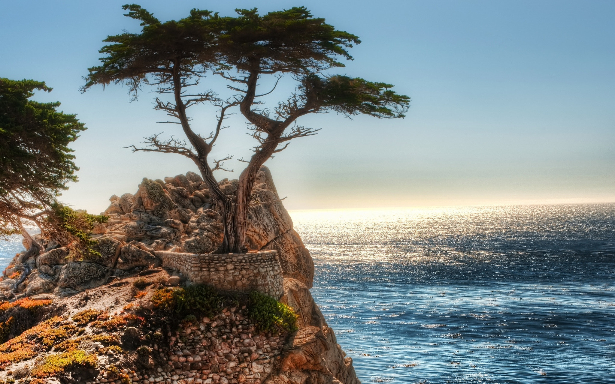 Photograph The tree  by Lincoln  Catch  on 500px